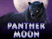 Panther Moon Вулкан 24